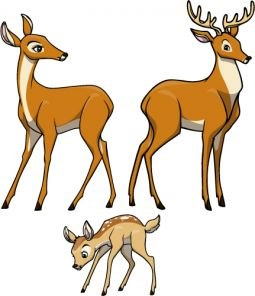 elementary wild animal wall stickers creative for kids